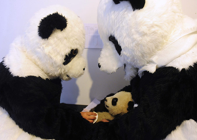 Furries with heart: this is kinda cute, kinda funny and a little disturbing.       Researchers dressed in panda costumes check the body temperature of a cub at the Hetaoping Research and Conservation Centre for the Giant Panda in Wolong, Sichuan province, China. via   mabelmoments :