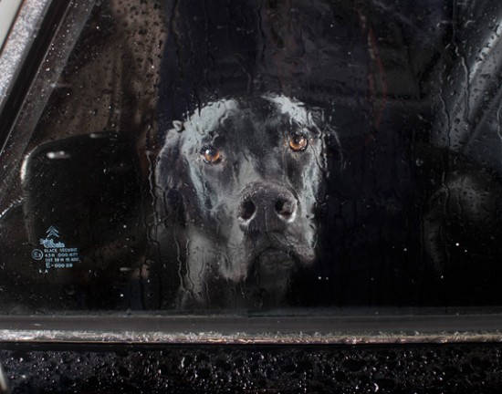 och-annie : This is such a sweet series. MUTE: the silence of dogs in cars .