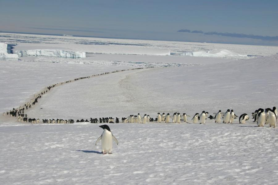 guys, I think we may be going the wrong way that little penguin is me via: mabelmoments: dougstumblr: