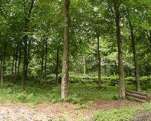 woodlandpic.jpg