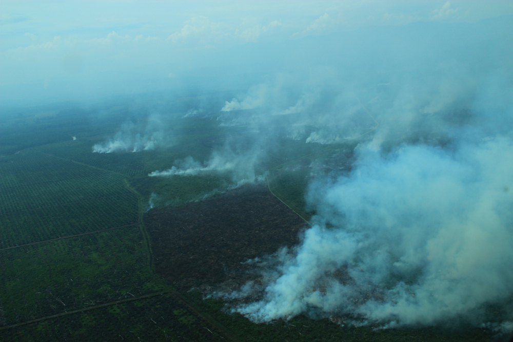 Extensive fires in Tripa swamps, June 2012. Copyright Sumatran Orangutan Conservation Programme