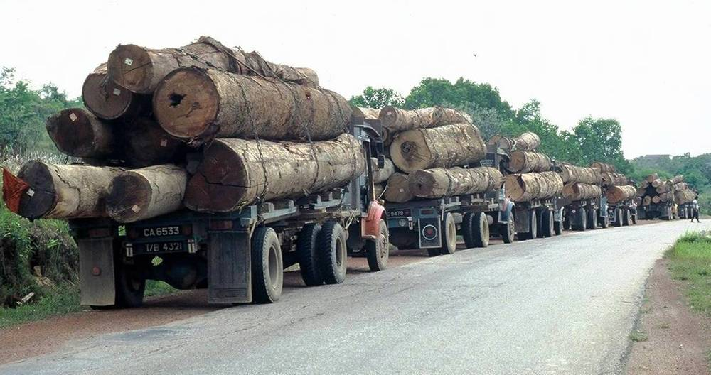 Logging trucks in Borneo--forests are falling fast.