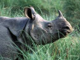 Chitwan: A haven for rhinos--for now.