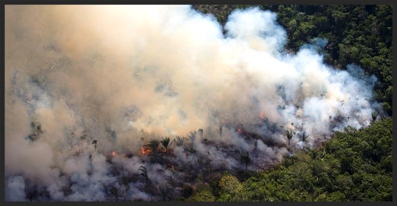 Fire-Amazon.jpg