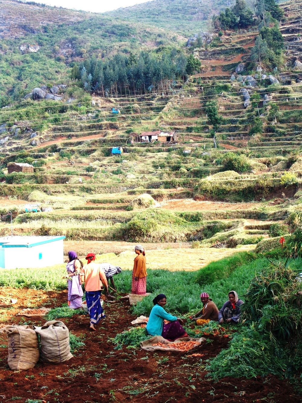 Intense land-use pressures... working with local communities is vital (photo by William Laurance)