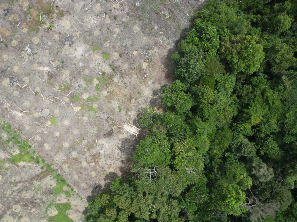A drone's-eye view: no place to hide for illegal loggers