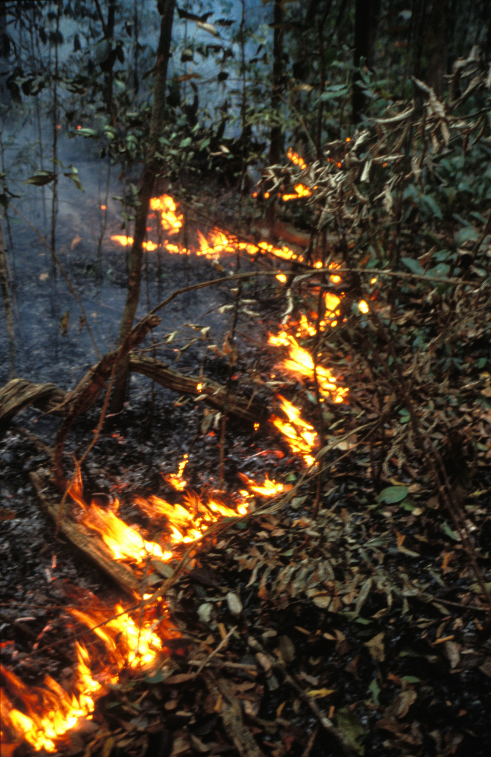 Fires... not natural in rainforests (photo by Mark C