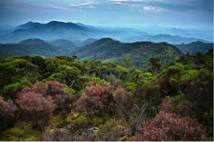 The Congo's primary forests as seen from Nyungwe National Park, Rwanda  (Photo © Liana Joseph)