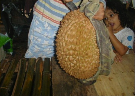 The famous durian fruit, much prized in Southeast Asia  (photo from www.molluscan.com)