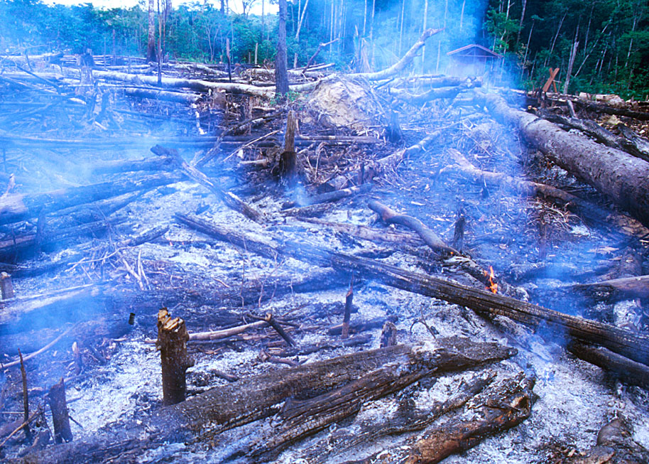 It's not just corporations that are killing forests (photo by William Laurance)