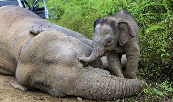 Mom killed by poachers...