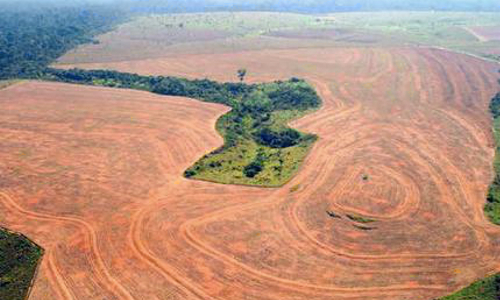In the Amazon, soy farming was a major rainforest killer.