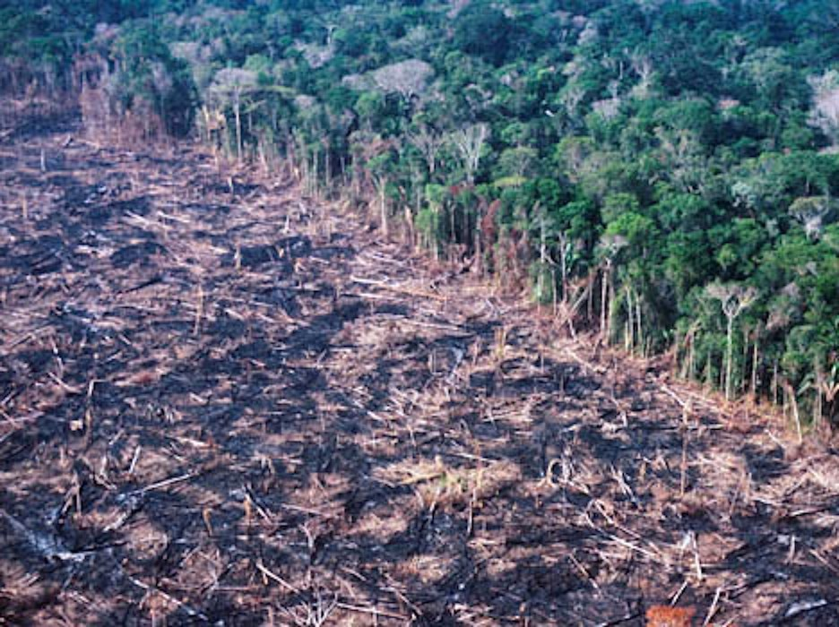 Rainforest destruction in the Peruvian Amazon...