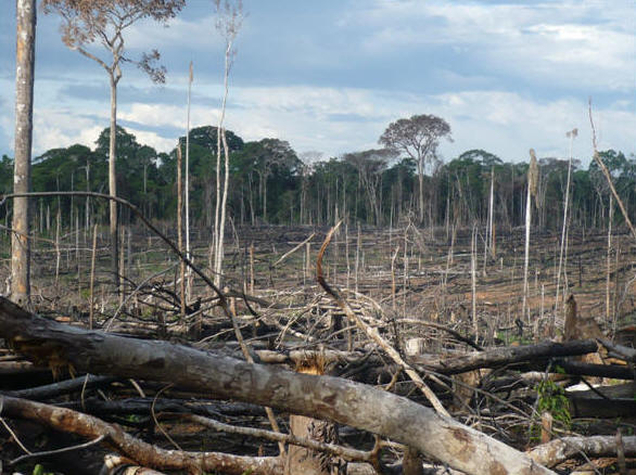 A rainforest dies in Peru