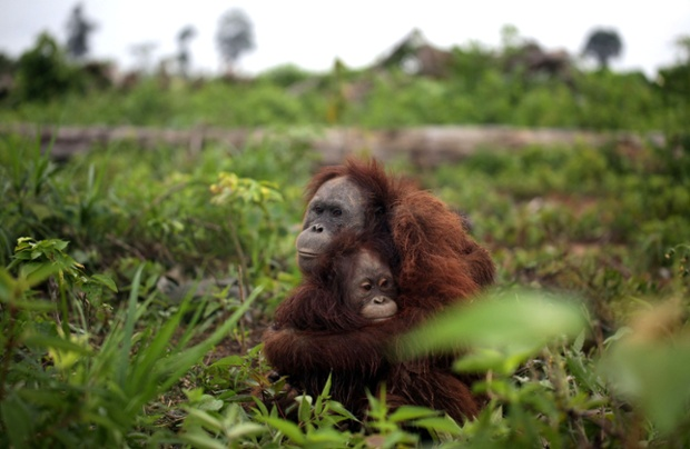 Biodiversity in trouble...