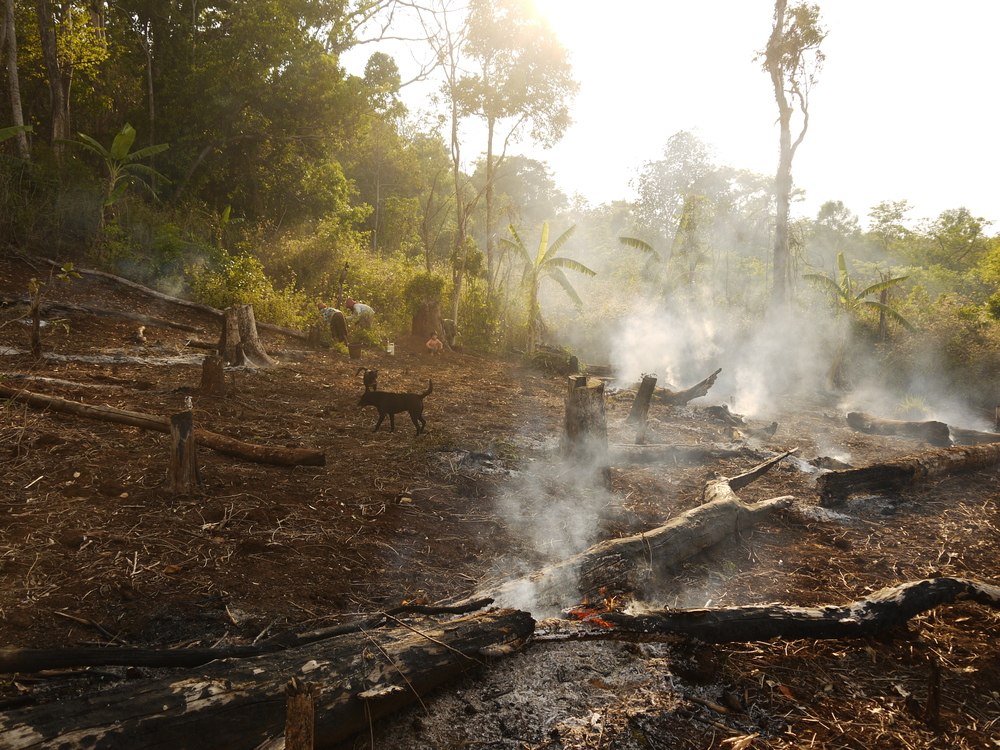 Pardon me, thou bleeding piece of Earth... forest loss in Cambodia  (photo by William Laurance)