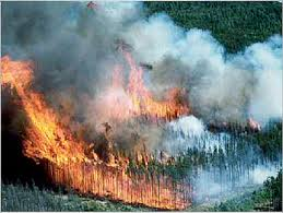 A boreal forest in flames