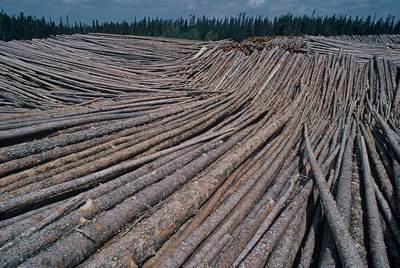 Massive stockpile of boreal timber