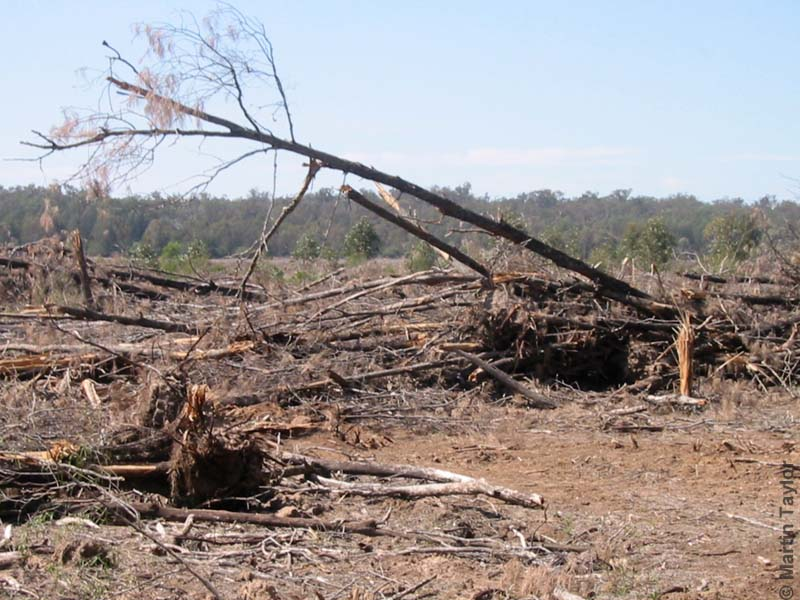 Forests continue to fall in Australia (photo (c) Martin Taylor, WWF)