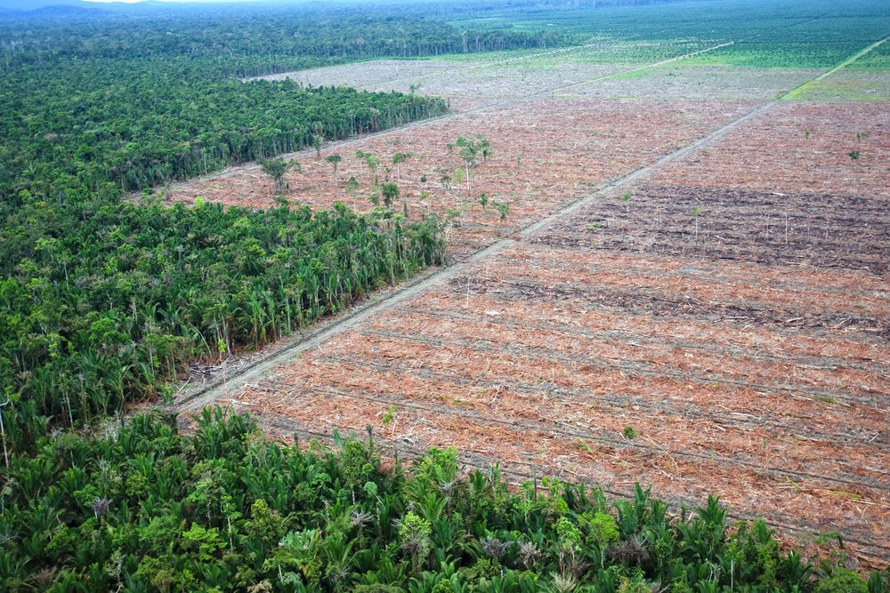 Rampant oil palm development in Indonesia New Guinea  (photo (c) Ardiles Rante, Greenpeace).