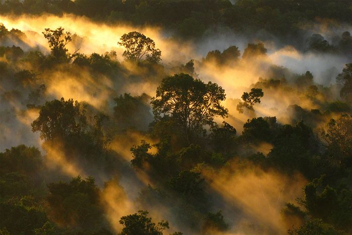 Forests are natural cloud-makers.