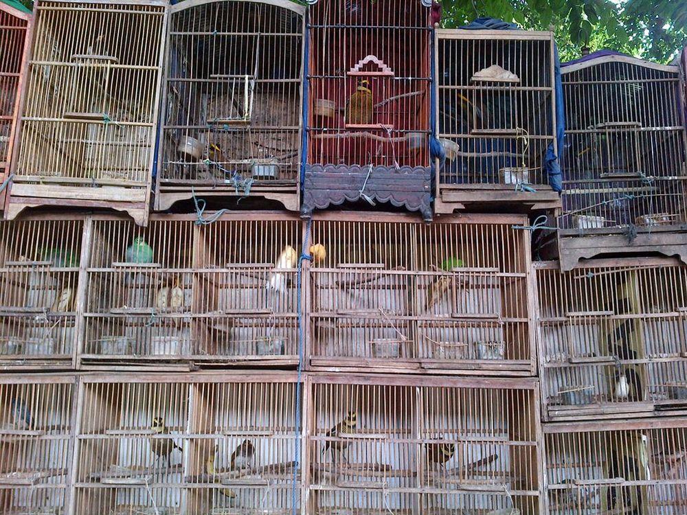 Birds for sale in a Jakarta market  (Kanitha Krishnasamy/TRAFFIC)