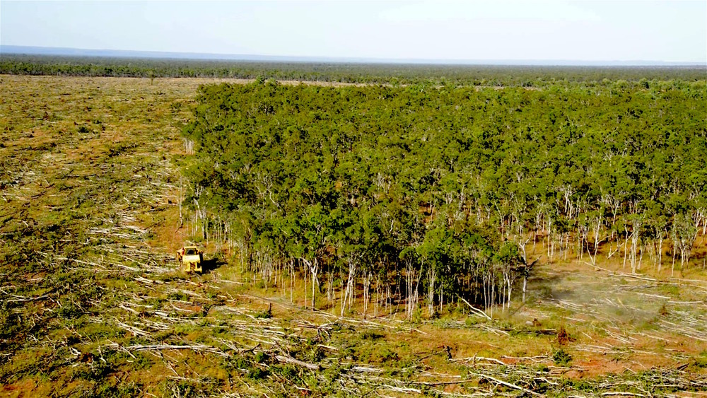Forests falling fast in Queensland (photo by Kerry Trapnell)