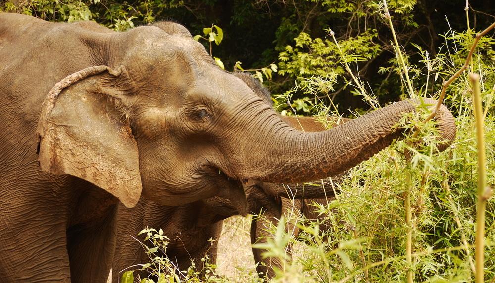 Cambodia61.jpg