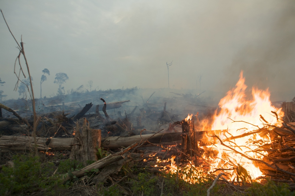 Another fire in Indonesian Borneo  (photo by David Gilbert/Greenpeace)