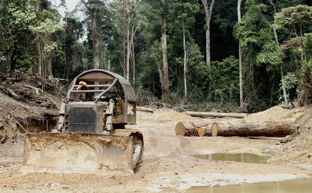 Loggers are bulldozing many new roads into the Congo Basin  (photo by William Laurance).