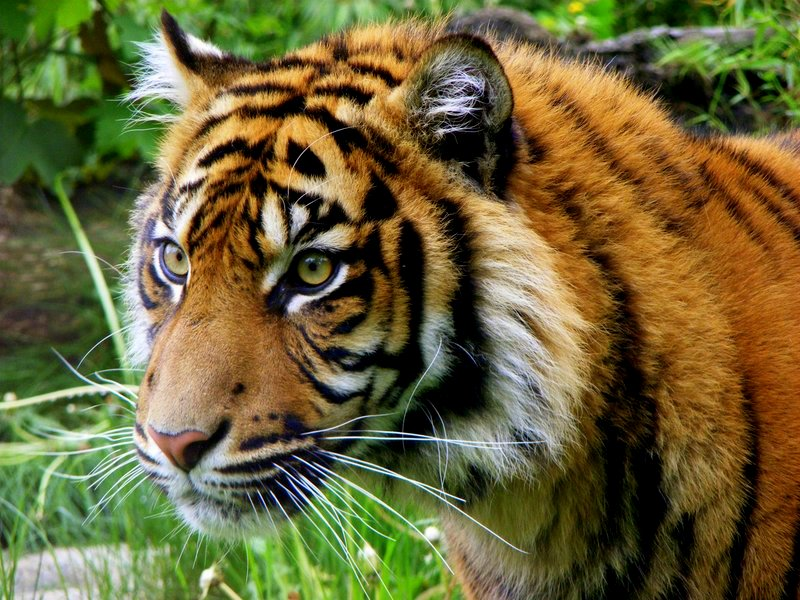 Poaching bloodbath continues in northern Sumatra, with new