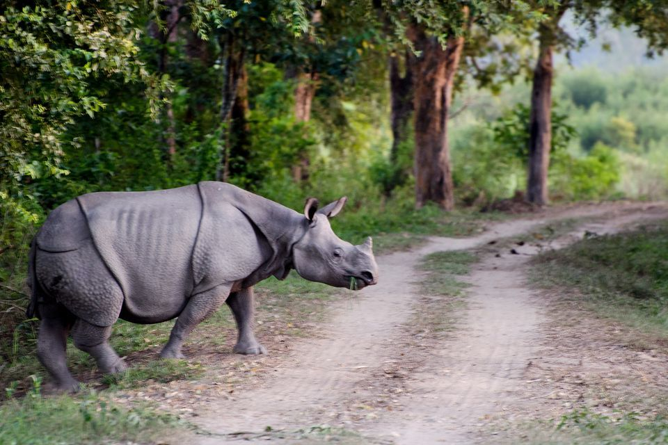 Humans are increasingly encroaching into critical habitats for species like this Indian rhinoceros.