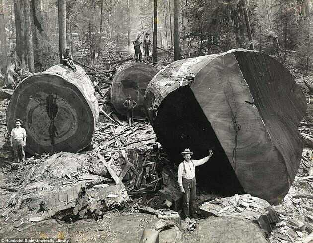 Where once there were giants (photo (c) Humboldt State University)