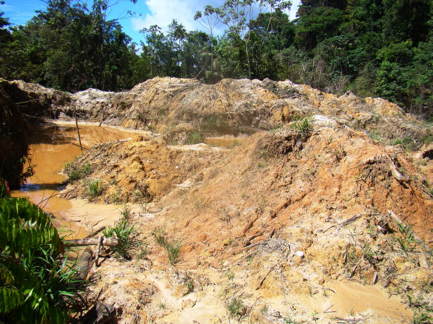 The scars of illegal gold mining in Suriname, South America (photo by William Laurance)