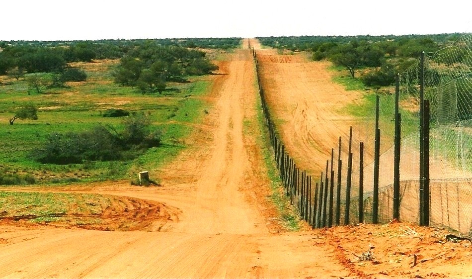 "At over 5,600 kilometers in length, Australia's massive ""dingo fence"" is the longest fence in the world."
