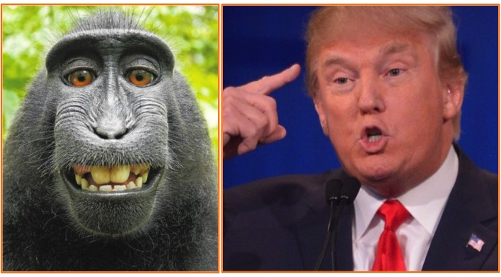 Question: Which of These Primates Knows More About Climate Change?