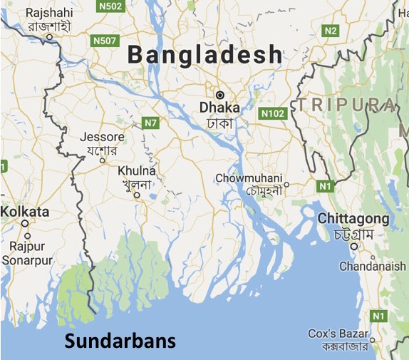 The mangrove forests of the Sundarbans (in green) in southwestern Bangladesh and the bordering area of India.