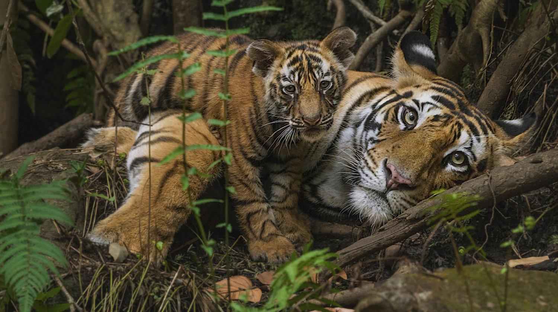 جنگل بارانی جنوب شرق آسیا