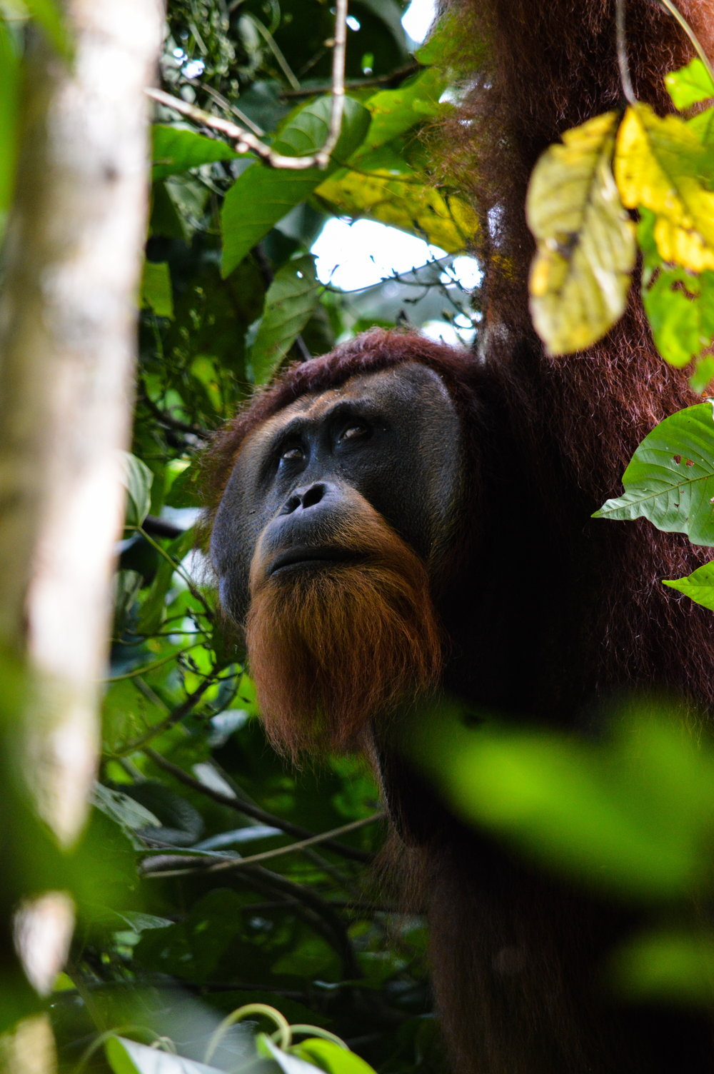 It's important to remember what we're fighting for -- visit the Leuser Ecosystem and see the wonders of Sumatra's imperiled nature  (photo (c) Suprayudi)