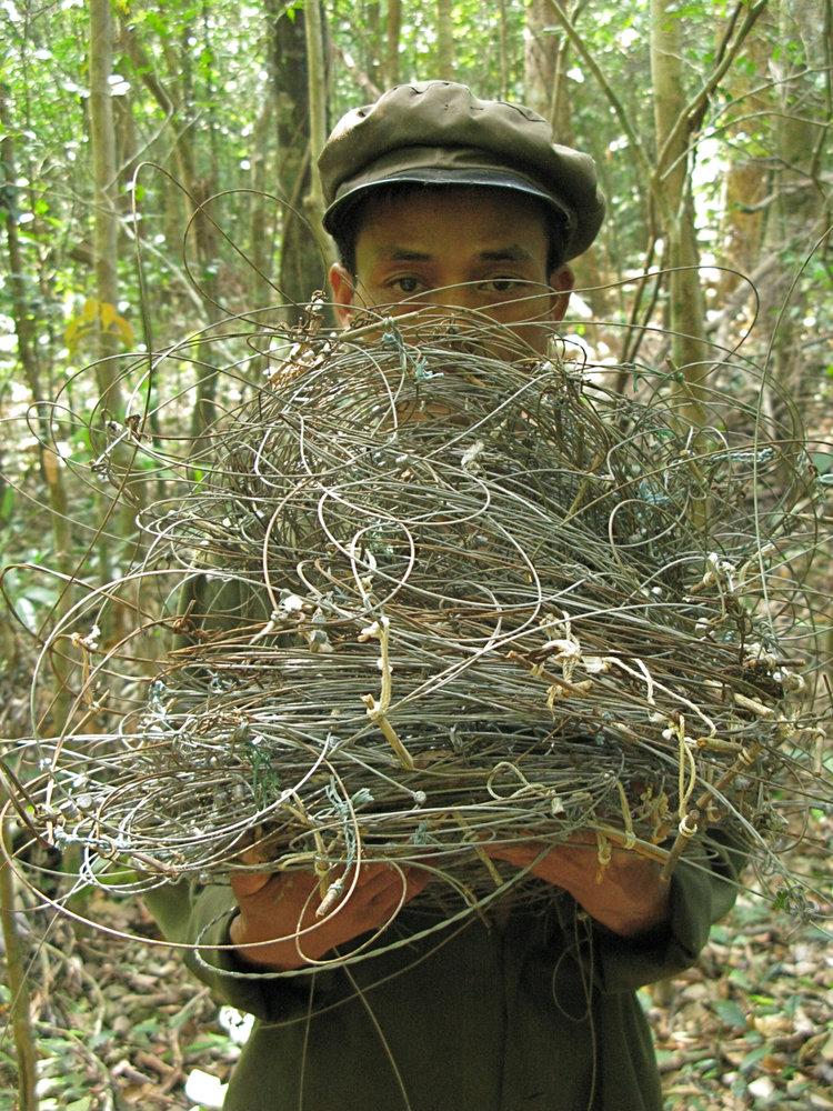 Armadilhas de arame removidas de uma área protegida no centro do Laos (Foto de William Robichaud)
