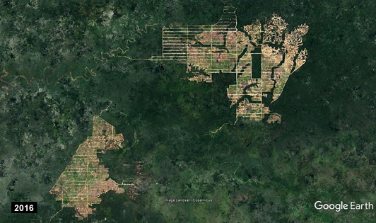 Massive forest clearing in Papua Province  (image from ANTJ/ForestHints.News)