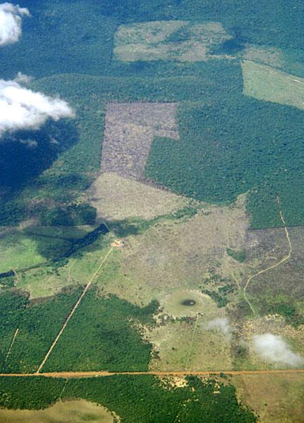 Road&deforestation.jpg