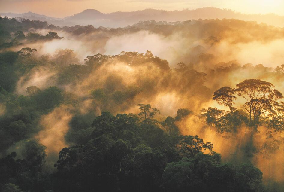 Sunrise-rainforest.jpg