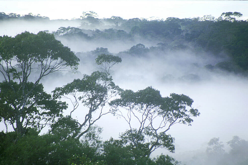 Canopy-mist.jpg
