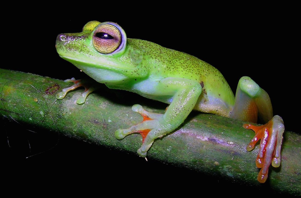 frog-reversed.jpg