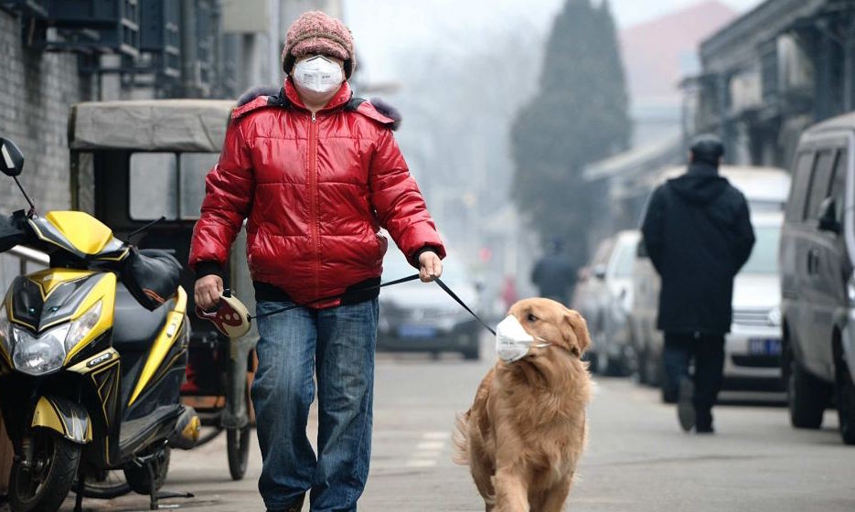 air-pollution-mask-for-pets-dogs.jpg
