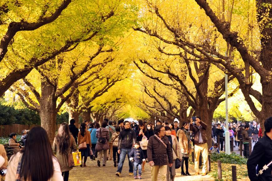 urban-trees.jpg