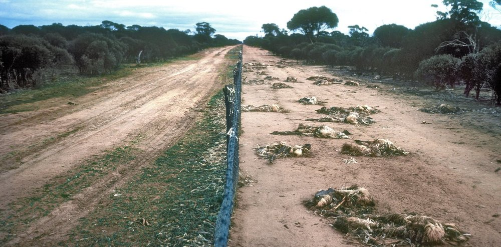 Emu-Barrier-Fence2.jpg
