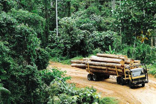 logging truck.jpg