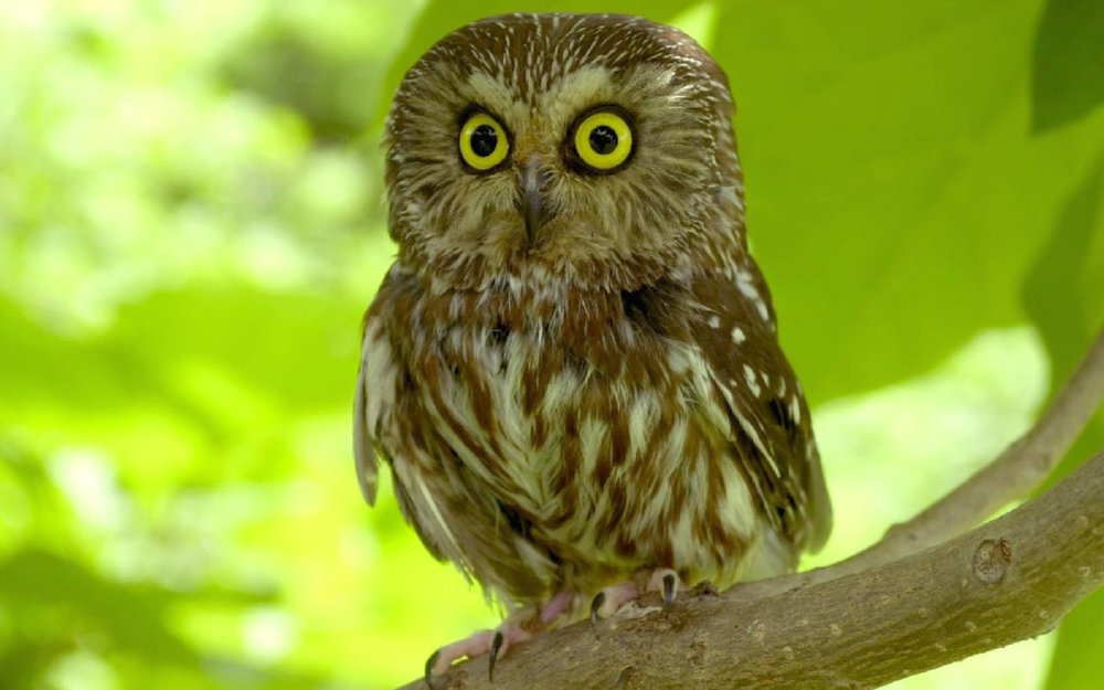 scared-owl-wallpaper-pictures-photos-in-best-quality.jpg